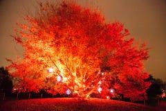 silhouette tree Στοκ φωτογραφία με δικαίωμα ελεύθερης χρήσης