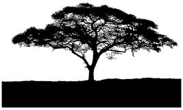 Silhouette of the tree African savannah. Isolated on white background Stock Photos