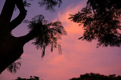 Silhouette of tree against beautiful pink sky Stock Images