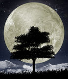 Silhouette of a tree against the big moon Royalty Free Stock Image