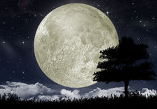 Silhouette of a tree against the big moon stock illustration