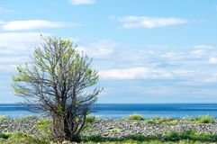 Silhouette of tree against blue sky and lake Baikal background. Royalty Free Stock Images