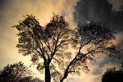 Silhouette of a tree against a cloudy sky Royalty Free Stock Photography