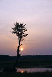 Silhouette of a tree against the coming sun Stock Photography