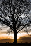 Silhouette from a tree Royalty Free Stock Image
