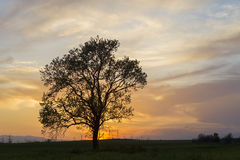 Silhouette of a tree Royalty Free Stock Photos