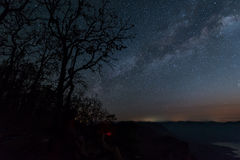 Silhouette tree against the milky way in a dark sky Royalty Free Stock Photography