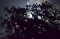 Silhouette of Tree against Moonlight - Natural Night Background Royalty Free Stock Photography