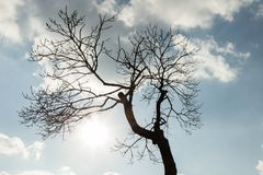 Silhouette of a tree against a sky with clouds Royalty Free Stock Photography