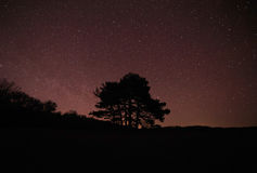 Silhouette of tree against starry sky. Silhouette of tree against starry night sky Royalty Free Stock Images