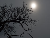 Silhouette of a tree against the sun Royalty Free Stock Photography