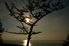 Silhouette of tree against sunset background. Royalty Free Stock Photos