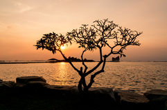 Silhouette of tree, The atmosphere during sunset at Koh Loi Sriracha,Chonburi,Thailand Royalty Free Stock Photography