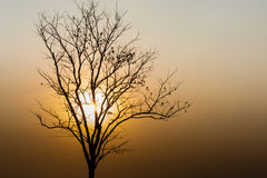 Silhouette of a tree. Silhouette tree on background sunset Royalty Free Stock Images
