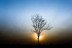 Silhouette of a tree. Silhouette tree on background sunset Royalty Free Stock Image