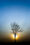 Silhouette of a tree. Silhouette tree on background sunset Stock Image