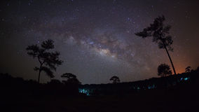 Silhouette of tree and beautiful milkyway on a night sky Royalty Free Stock Image