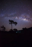 Silhouette of tree and beautiful milkyway on a night sky Royalty Free Stock Images