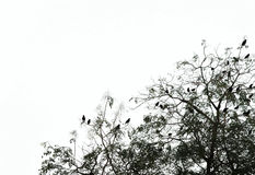 Silhouette of a tree with birds, copyspace on the sky Royalty Free Stock Image