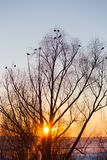 Silhouette of tree and birds. Over sunset sky stock image