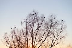 Silhouette of tree and birds. Over sunset sky stock photos