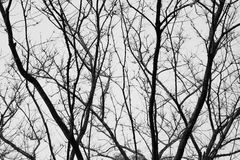 Silhouette of tree black and white. Detail of silhouette of tree black and white Stock Photography