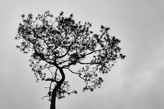 Silhouette of tree. Black and white tone. royalty free stock images