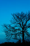 Silhouette of a tree. Silhouette of a tree on blue sky background Royalty Free Stock Photo