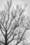 Silhouette of a tree branch against the sky, Black and white stock photography
