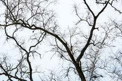 Silhouette of tree branch Royalty Free Stock Photo