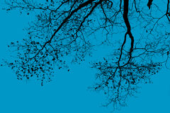 Silhouette of a tree. Silhouette tree branch on blue sky Stock Photos
