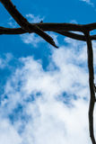 Silhouette tree branch frame Royalty Free Stock Images
