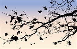 Silhouette of Tree Branch and Leaves Royalty Free Stock Image