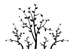 Silhouette of tree branch for your decoration. In black and white color Royalty Free Stock Photos