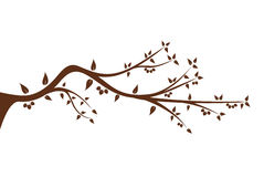 Silhouette of tree branch for your decoration Stock Photography