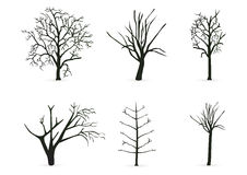 Silhouette tree branches Royalty Free Stock Image