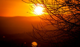 Silhouette of tree branches. Against the background of a glowing beautiful sunset Stock Photography