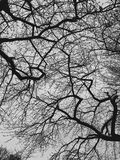 Silhouette of tree branches Stock Image