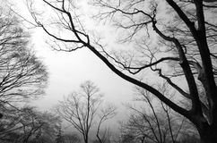 Silhouette of tree branches. Royalty Free Stock Photography