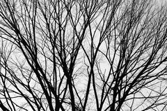 Silhouette of tree branches. Royalty Free Stock Photos