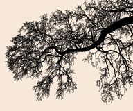 Silhouette of tree branches in the cold season stock images