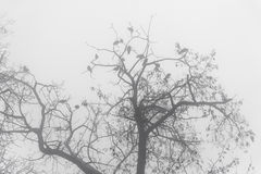 Silhouette Tree Branches in the Fog Stock Images