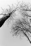 Silhouette of tree branches Royalty Free Stock Image