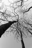Silhouette of tree branches Stock Images