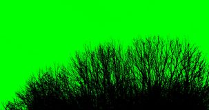 Silhouette of tree branches on a green background. Silhouette of tree branches on a green backgroun. Chromakey stock footage