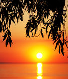 Silhouette of tree branches and sea at sunset Stock Photography