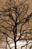 Silhouette Of Tree Branches sepia Stock Photos