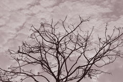 Silhouette Of Tree Branches Sepia Royalty Free Stock Photography