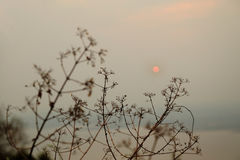 Silhouette of tree branches with sunset on background stock image