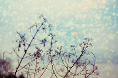 Silhouette of tree branches with sunset and snow falling. royalty free stock photography